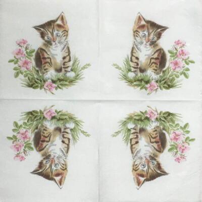 猫ちゃん(一重ナプキン)画像