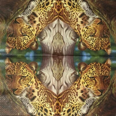 Leopardの画像