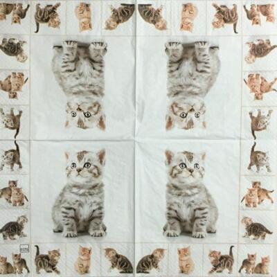 可愛い猫たちの画像