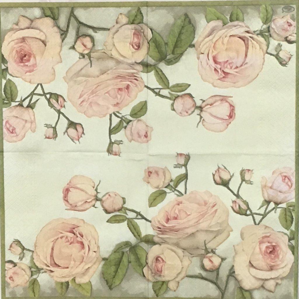 淡いピンクのバラの画像