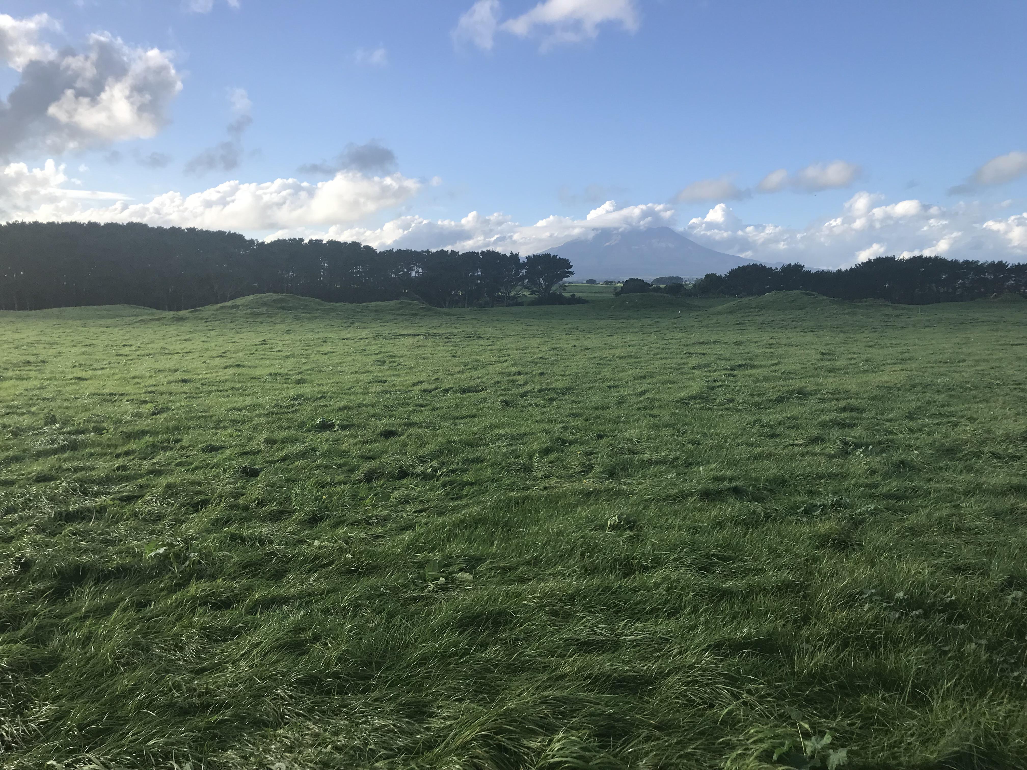 牧場の写真1