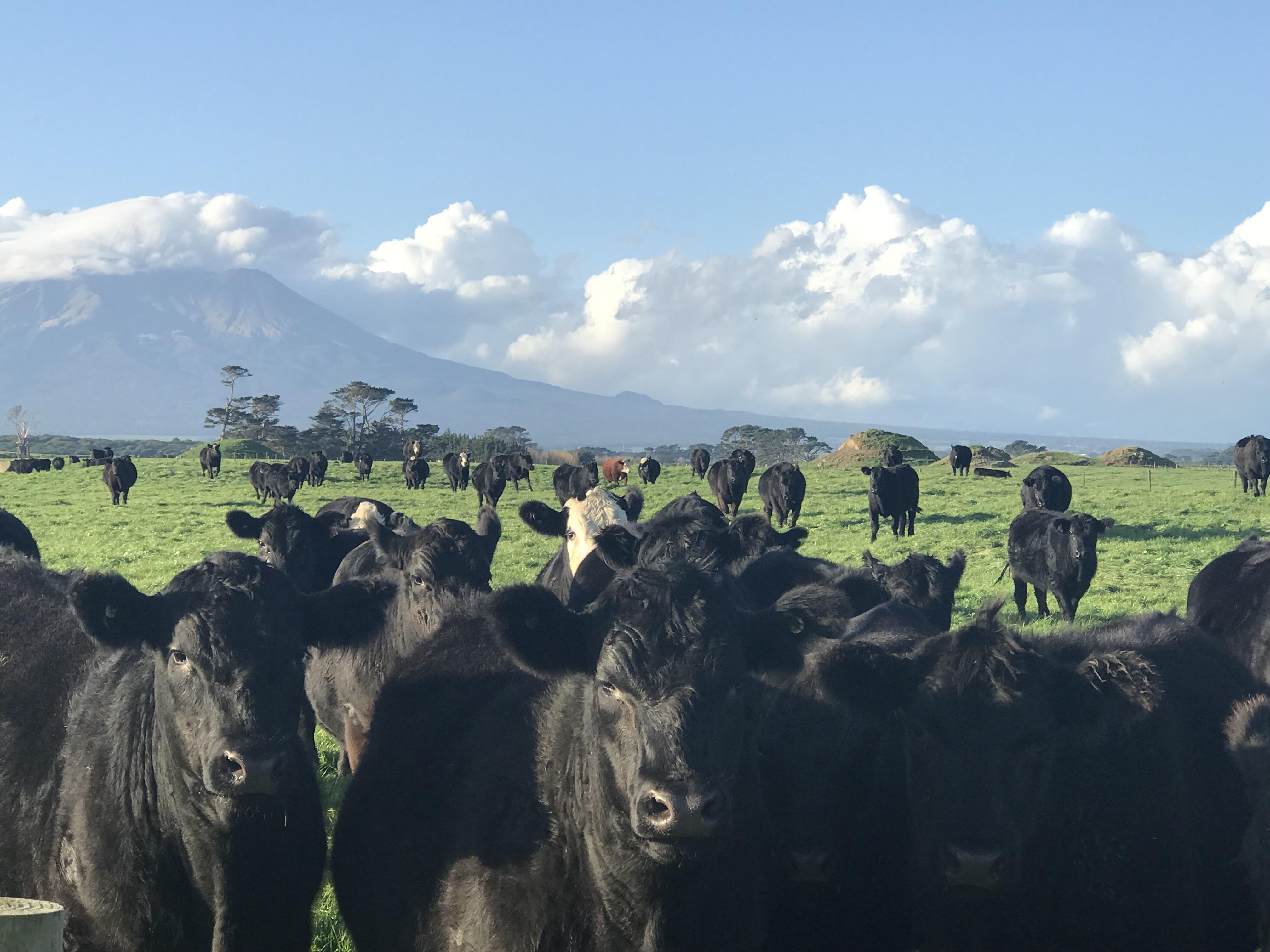 牧場の写真2