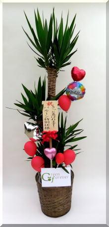 青年の木(ユッカ)10号バルーン特別使用の画像