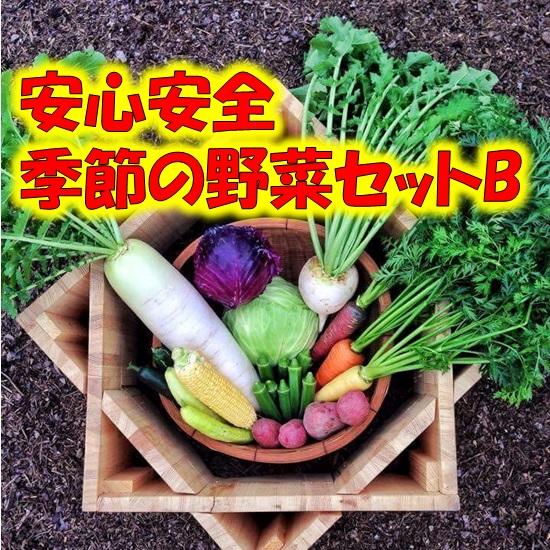 【無農薬・有機肥料】季節の野菜セットB 12~13種類 【送料無料】北海道・沖縄・離島は追加送料の画像