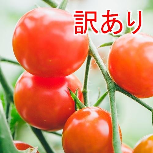 【訳あり】新鮮トマト  (細野Farm)<生産者直送/他商品との同梱不可>の画像