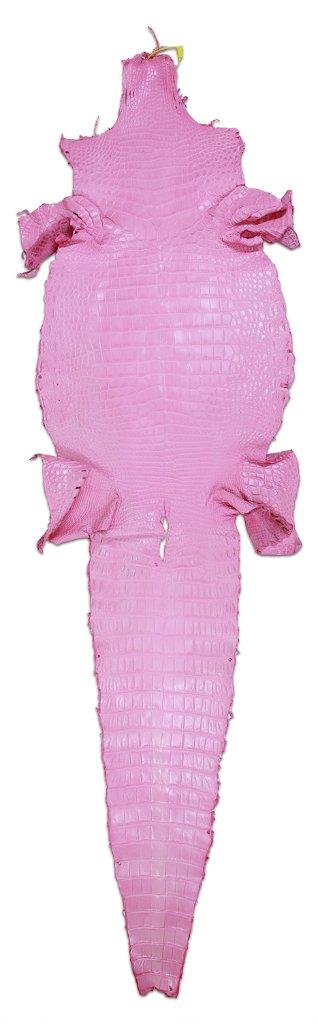 Siamensis Crocodylus Pinkの画像