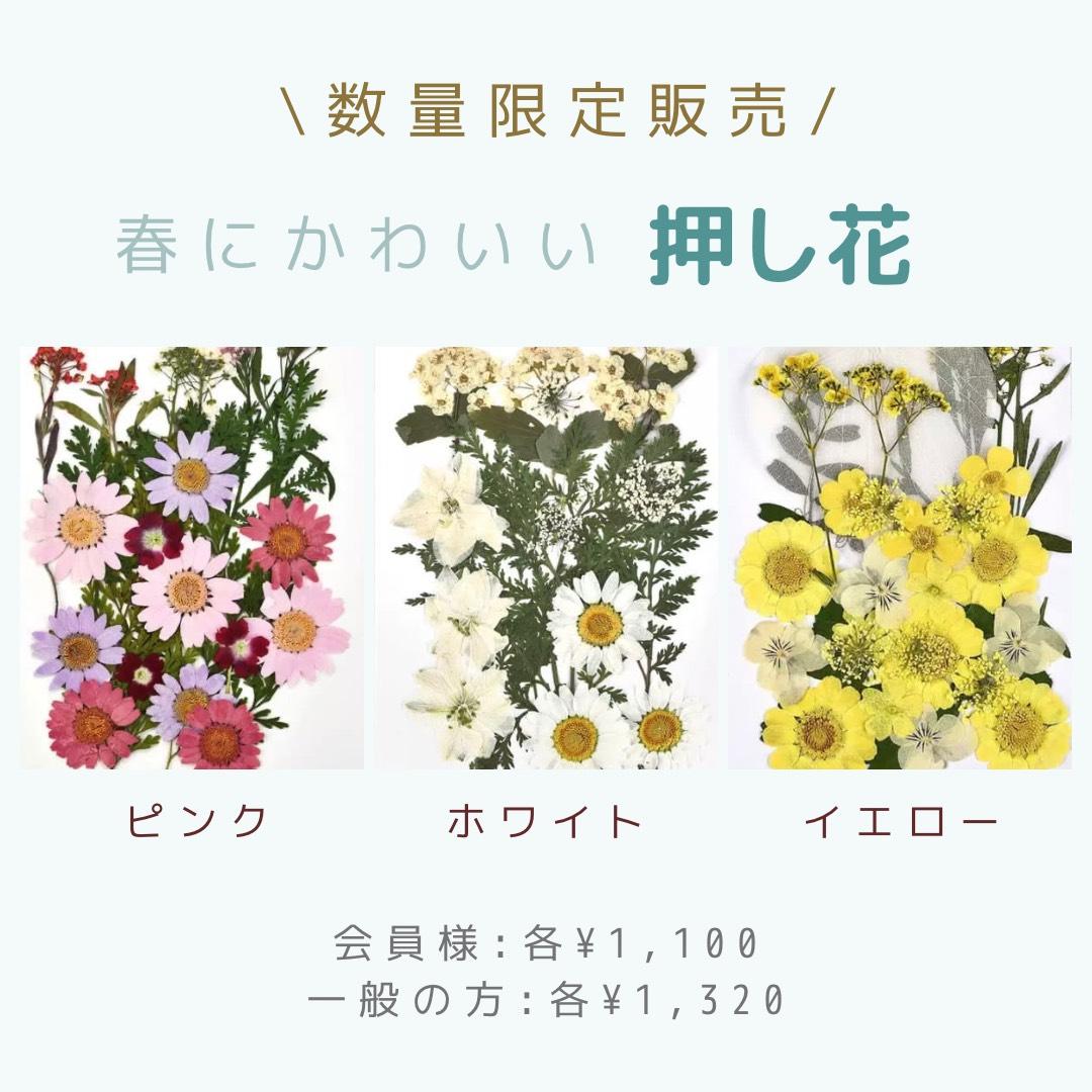 押し花画像