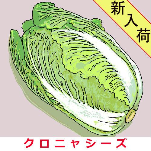 金沢大玉結球白菜 約1000粒の画像