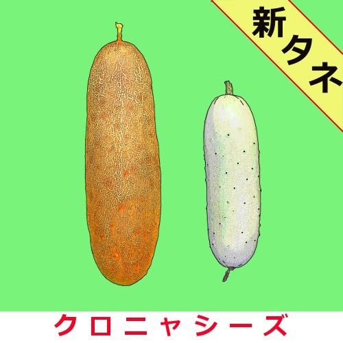 赤毛瓜(アカモーウィ) 約40粒画像