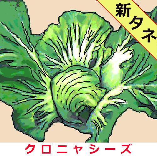 結球高菜 約2000粒 送料無料、非課税の画像
