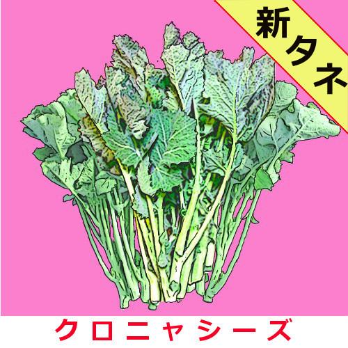 のらぼう菜 約1500粒 送料無料、非課税の画像