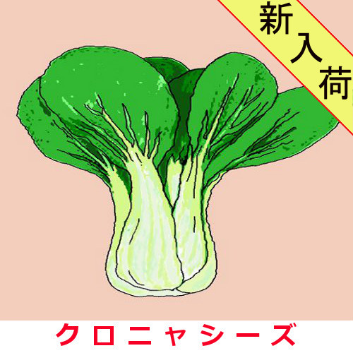 青梗菜 約2000粒の画像