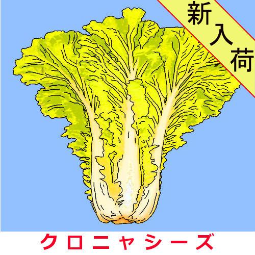 黄金葉山東菜  約2000粒画像