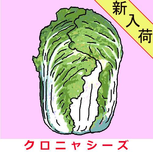 野崎白菜 約1000粒の画像