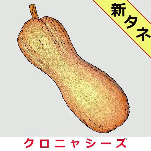 バターナッツ・ルゴサ 20粒の画像