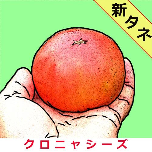 栗原トマト 約30粒画像