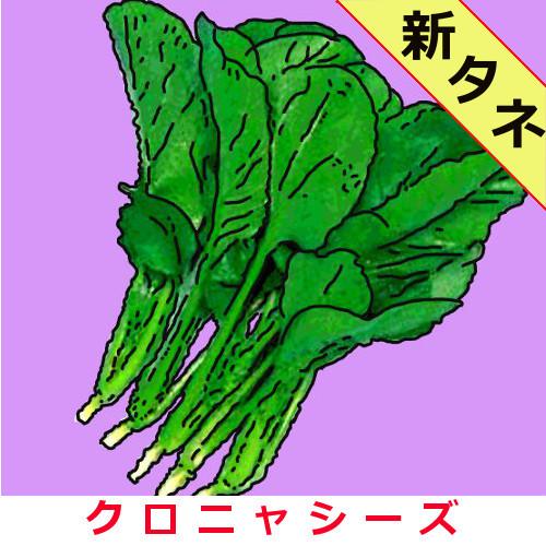新黒葉小松菜 約1000粒画像