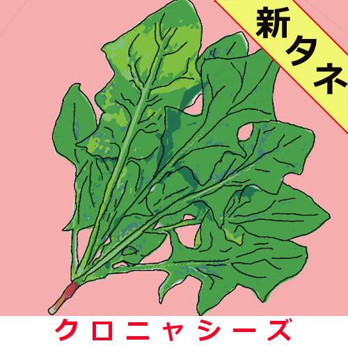 日本法蓮草 約1000粒画像