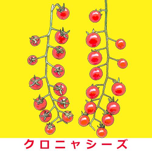 マイクロトマト 50粒画像