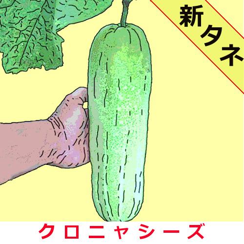 加賀太胡瓜 約40粒の画像