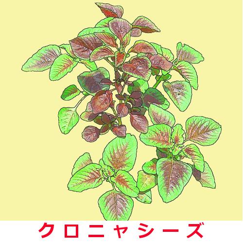 紅ヒユナ 約2000粒画像