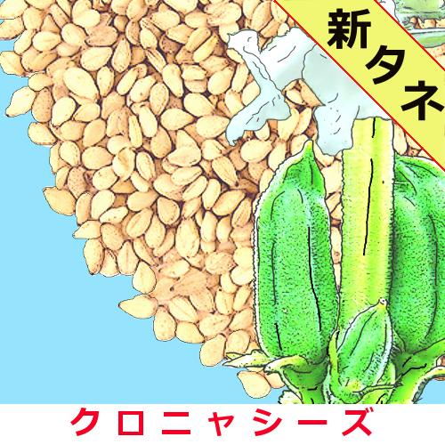 喜界島の白ゴマ 1000粒の画像