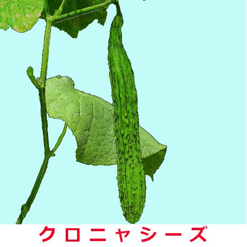 四葉胡瓜 約30粒の画像