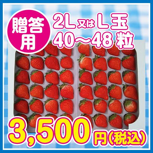 夏いちご・サマープリンセス 贈答用 (20粒~24粒〈約300g〉×2パック) 送料別画像