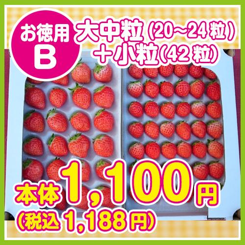 夏いちご・サマープリンセス お徳用B・大中粒(20~24粒)+小粒(42粒) 送料別の画像