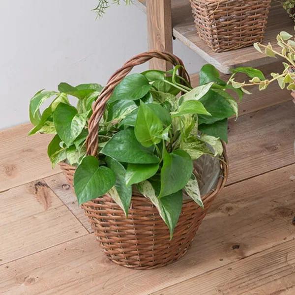 植木鉢バスケット