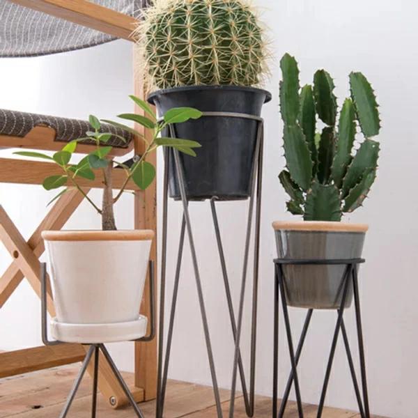 サボテン植木鉢イメージ