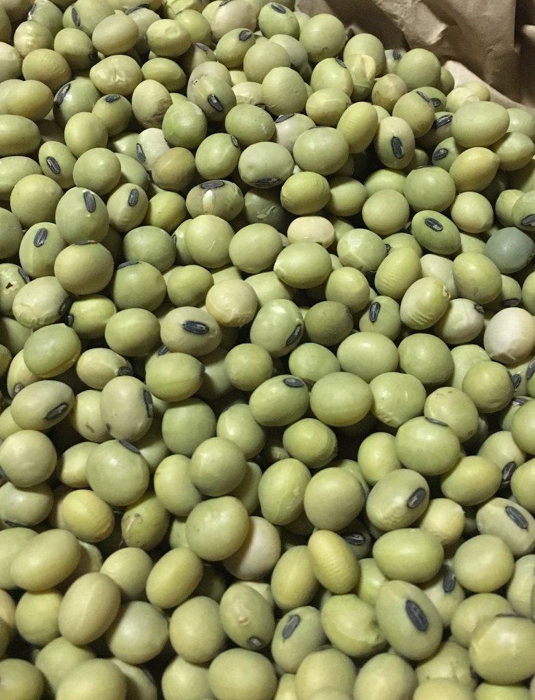 自然栽培在来種大豆(サトウイラズ)の画像