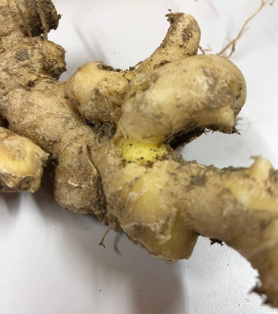 生姜(無肥料農薬1回)の画像
