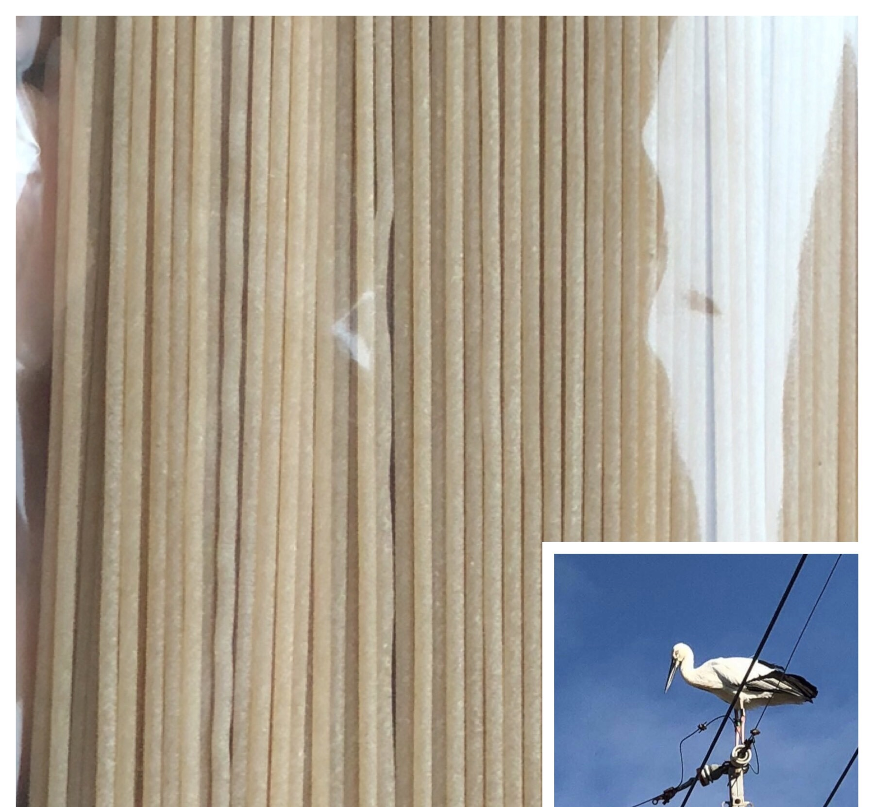 コウノトリが来る畑の古代小麦で作った世界一のパスタ(3ぶつき)画像