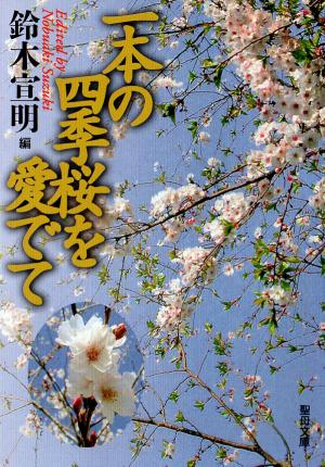 一本の四季桜を愛でて画像